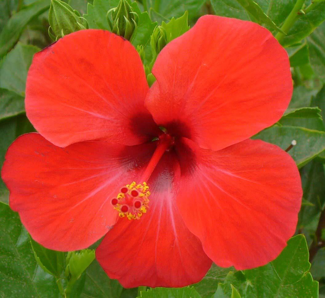 Fleurs et jardins handir alit for Fleurs des jardins